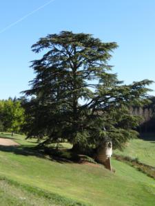10-Le parc du château (Cliché Alexandra Mignot)